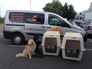 Transport taxi pour chiens et chats1 - photo 2
